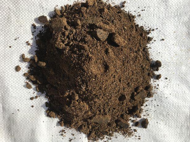 MAKUCH z nasion Rzepaku