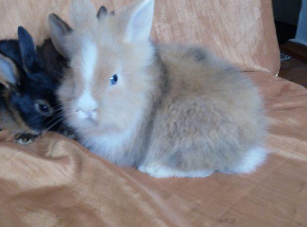 кролики минники милашки