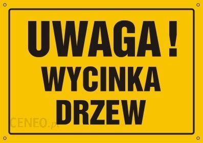 Wycinka drzew/czyszczenie dzialek/koszenie/skup drewna/transport