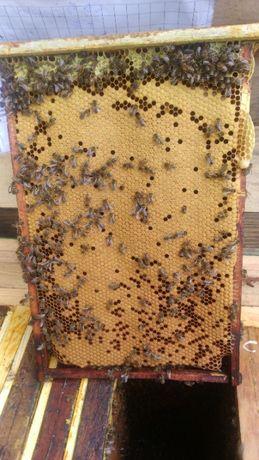 Młode rodziny pszczele ,odkłady pszczele ,pszczoły