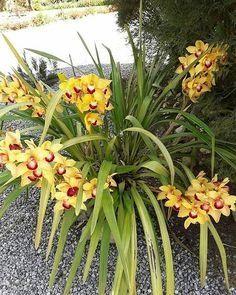 Vasos de Orquídeas