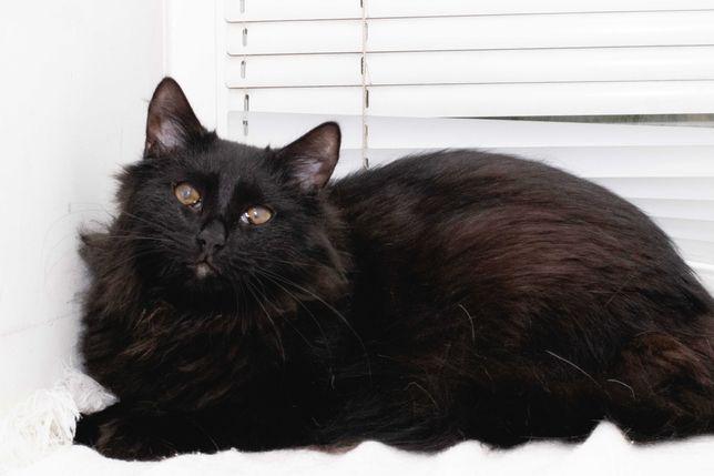 Котик Франк (11 месяцев) мечтает попасть в любящие ручки СРОЧНО!