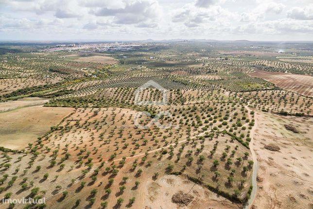 Olival com 5,6 hectares e com hidrante do Alqueva | Moura