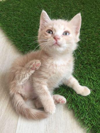 Котёнок девочка в добрые руки!