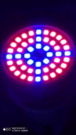 Фитолампы и озоновые лампы высокого качества