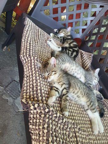 Małe kotki . Koty