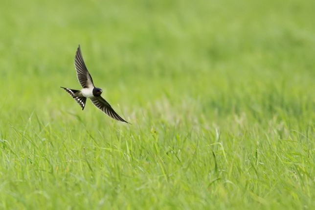 ornitolog, ptaki, nietoperze, fotowoltaika, opinia, ekspertyza, nadzór