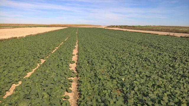 Dzierżawa ziemii rolnej