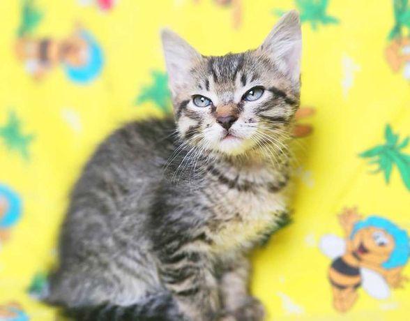 очаровательный полосатый котёнок Май, кошка, 4 месяца