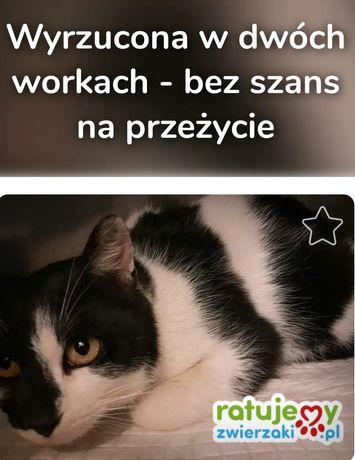Kociak potrącony przez auto! Wyrzucona w worku kotka proszą o pomoc !!