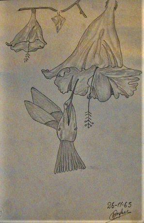 Antigos Desenhos/lápis-KROPOT-Naif-1954/1969-O preço é o total dos 7