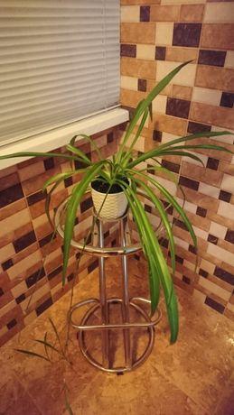 Продам не дорого Хлорофитум - комнатное растение , фильтр воздуха.