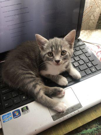 Отдам котенка в самые хорошие руки