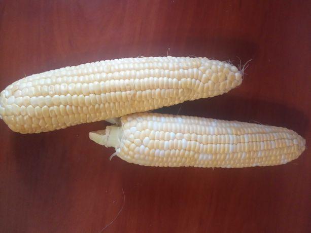 Кукуруза очень вкусная сладкая опт