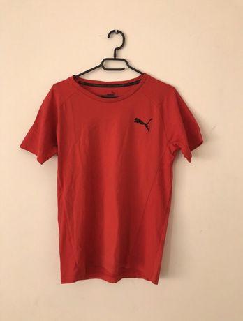 Koszulka sportowa puma