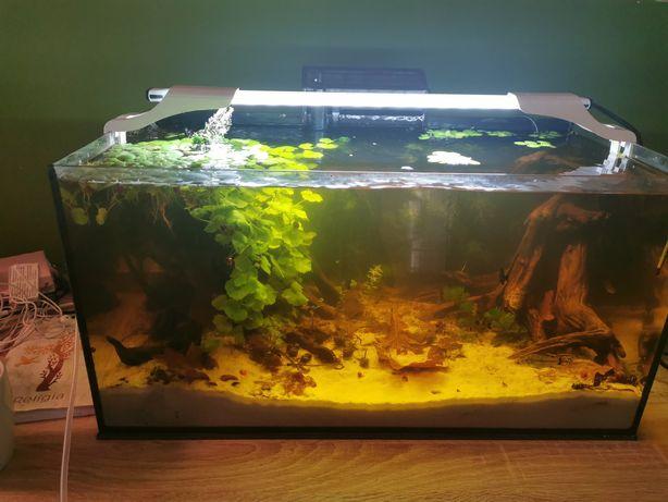 Akwarium 54l z życiem