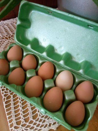 Jaja konsumpcyjne perliczek