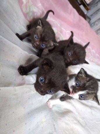Очаровательные крошечные котята