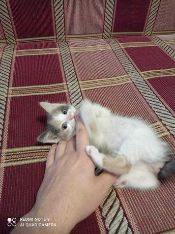 Кошенята в хороші руки
