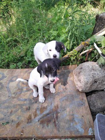 Очаровательные и очень смышленые щеночки ищут дом!
