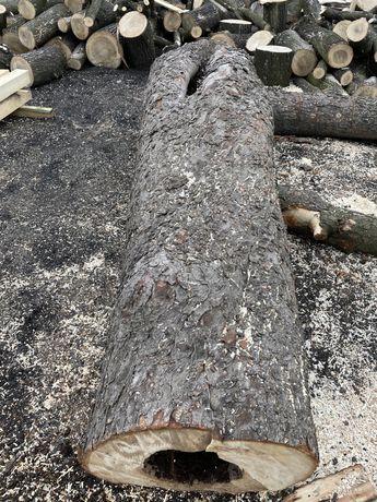 Pień, kłoda, drewno puste w środku