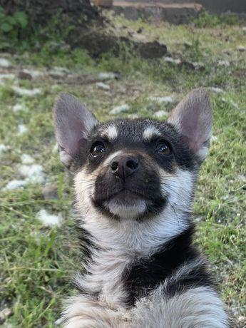 Щенки щеночки щенята