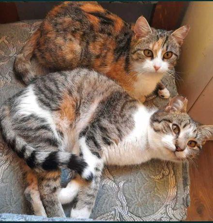 Młodziutkie rodzeństwo do pokochania