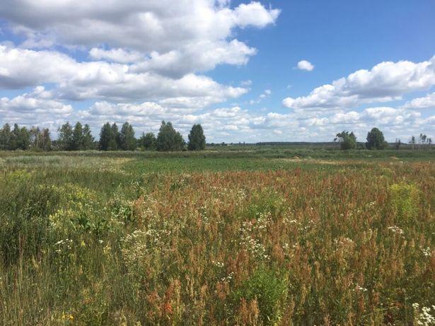 Земельна ділянка 50соток - 60км від Києва (озеро, ліс). Власник.
