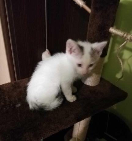 Oddam  kotki do adopcji