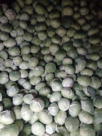 Продам капусту, цена договорная
