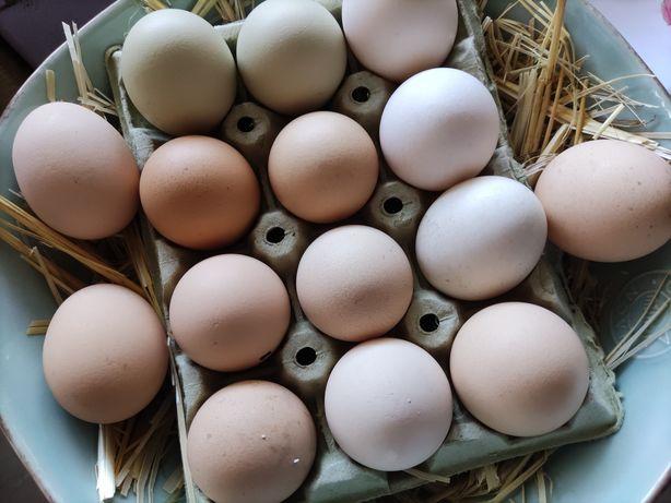 Ovos caseiros 100% biológicos a dúzia