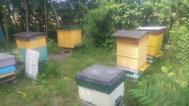 Pszczoły z ulami.