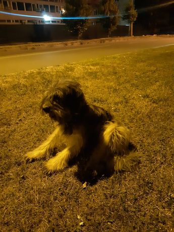 Собака/пёс с ошейником
