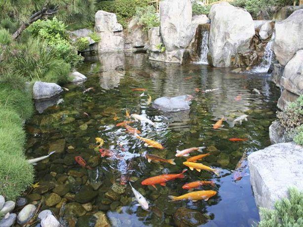 садовый пруд с рыбками,карпы кои Киев,цветные кувшинки,корм для кои