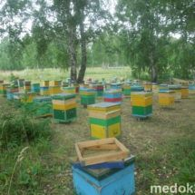 Пчьоли,бджоли,недорого,маткі ,відводи.