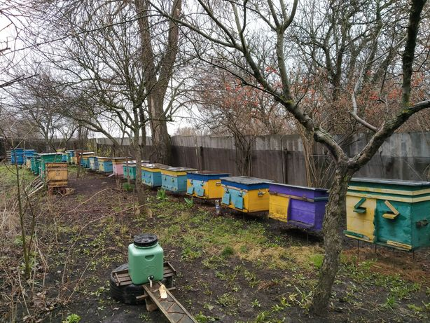Бджолосім'ї, вулики.