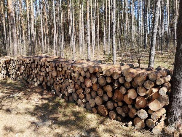 Drewno drzewo sosna metry na opał
