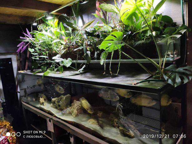 Продам аквариум 3м