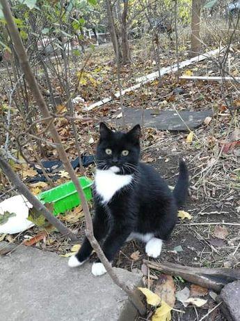 Милый котейка ищет дом!!!