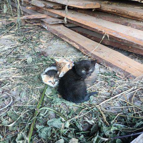 Милесенькі кошенята шукають свої домівки