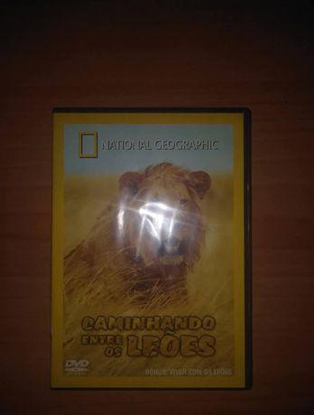 vendo o National Geographic Caminhando Entre os Leões