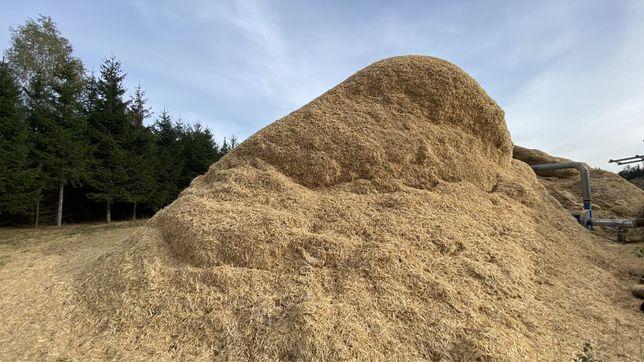 Stróżyna, biomasa, łyko, podkład/ zrębkipod borówke