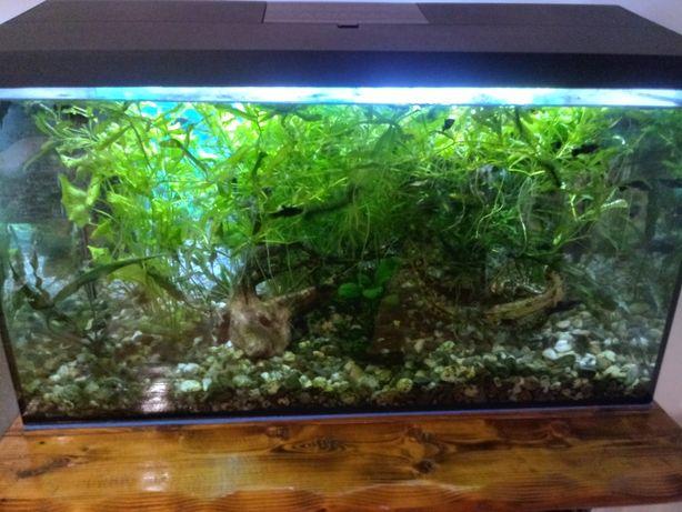 Sprzedam żywe rośliny do akwarium