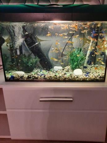 Akwarium ok 50 litrów z rybkami