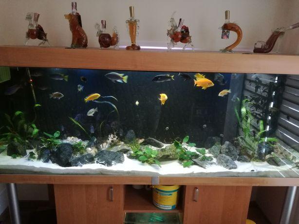 Duże akwarium sprzedam