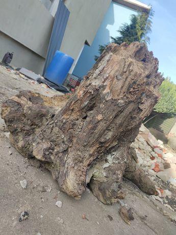 Duży korzeń (ozdobny) za darmo