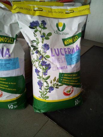 Lucerna Kometa, lucerna mieszańcowa, nasiona lucerny, wysyłka lucerny
