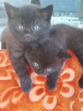 Черненькие котята