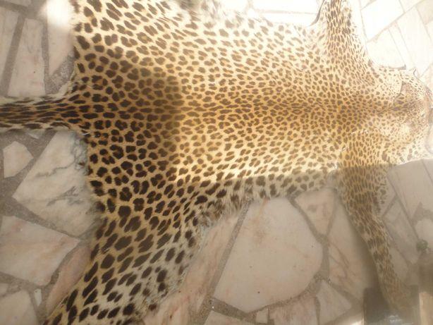 Tapete pele de leopardo usado