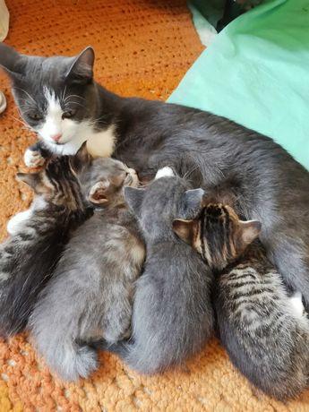 Отдам котят 4 кошечки и 1 мальчик.